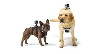 Gopro Dog harness